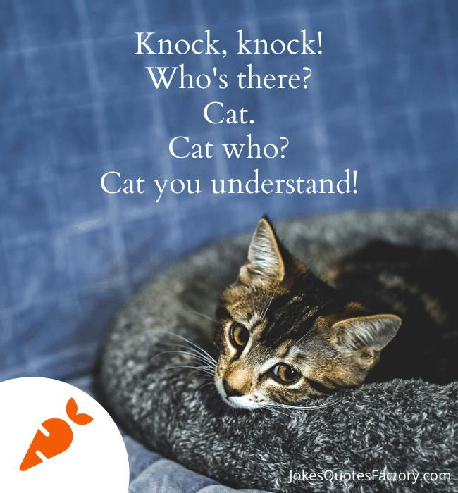 Cat you understand