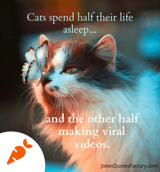 Cats spend half their life asleep