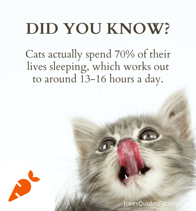 Cats usually spend 70% of their lives sleeping
