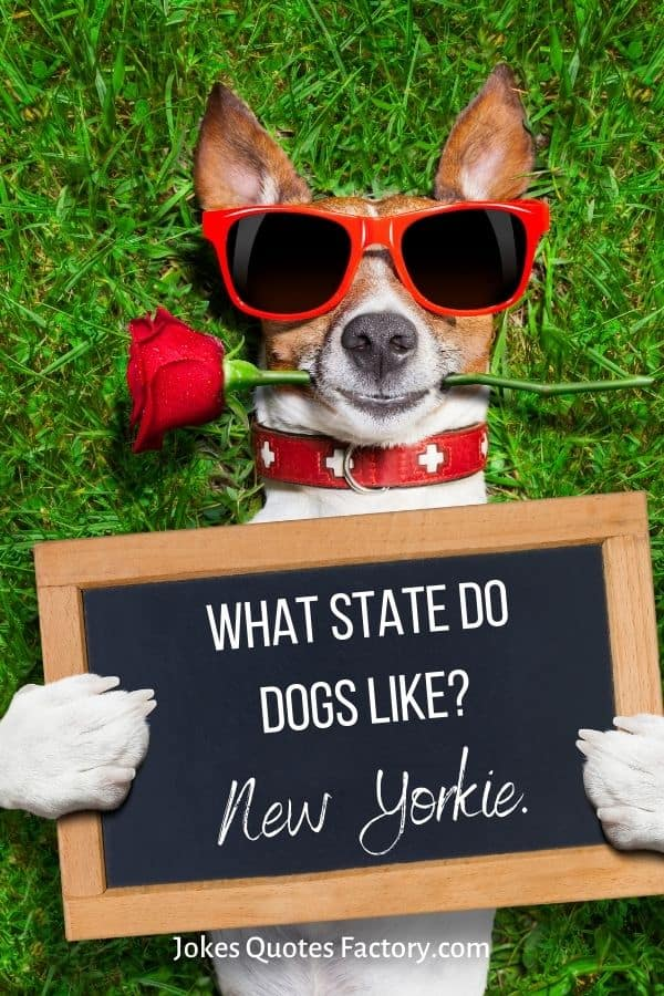 What state do dogs like