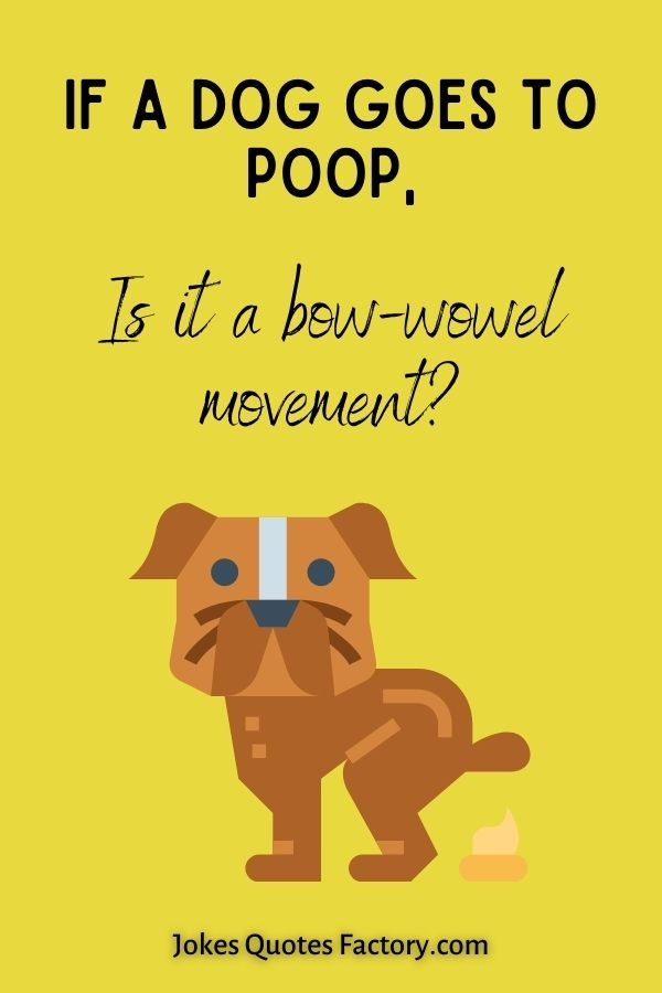 If a dog goes to poop