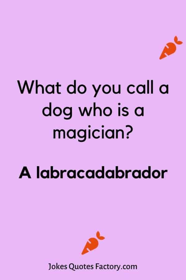 What do you call a dog who is a magician