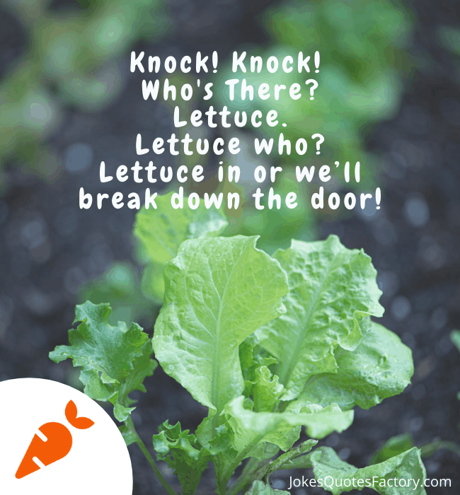 Lettuce in or we'll break down the door