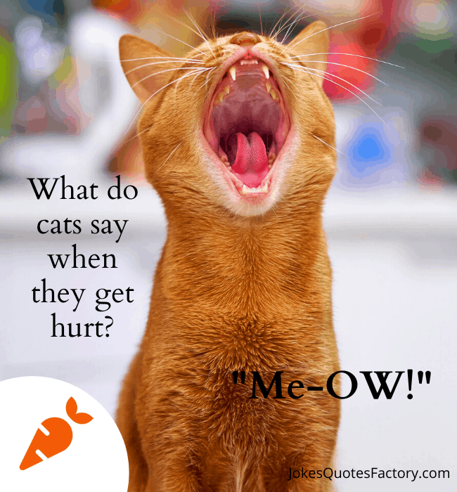 What do cats say when they get hurt