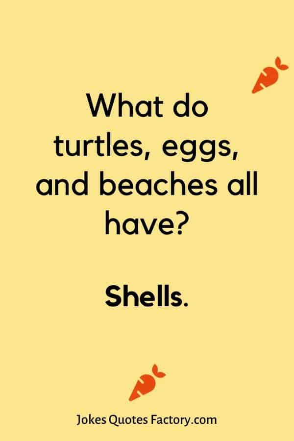 What do turtles, eggs, and beaches all have