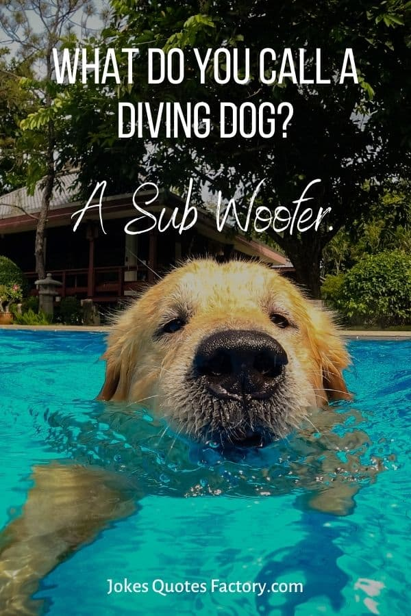 What do you call a diving dog