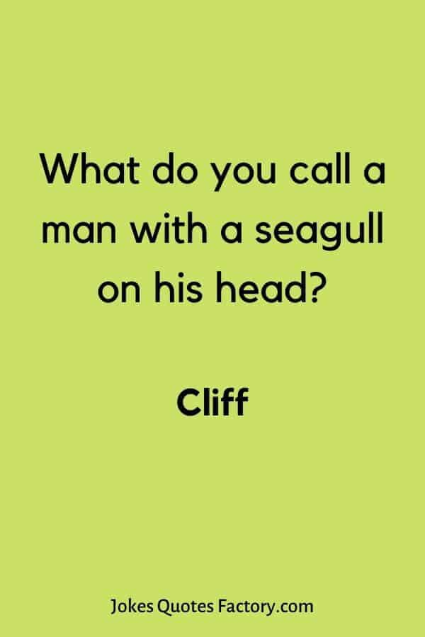 What do you call a man with a seagull on his head - what do you call jokes