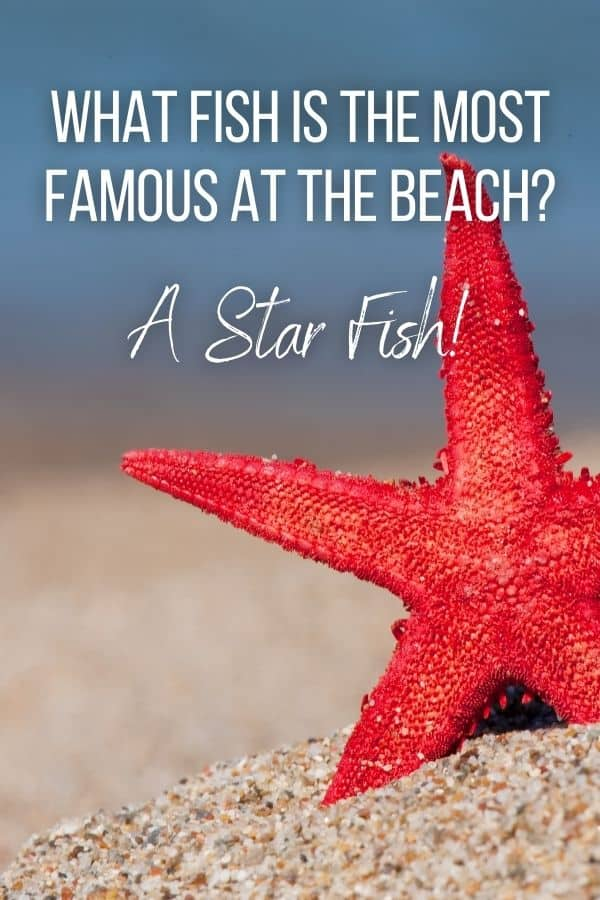 What fish is the most famous at the beach