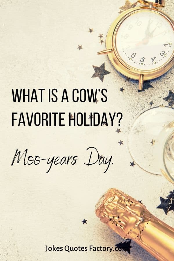 What is a cow's favorite holiday