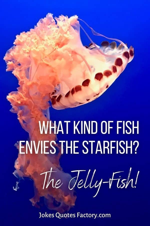 What kind of fish envies the starfish