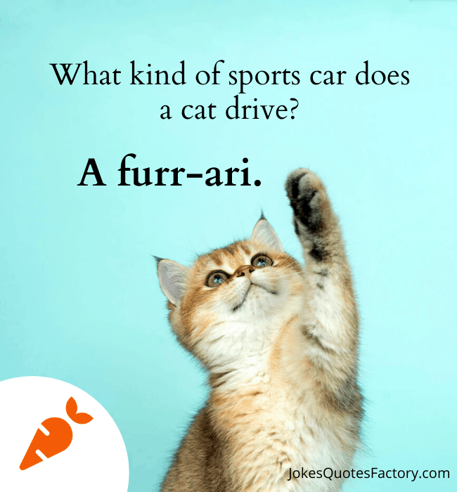 What kind of sports car does a cat have