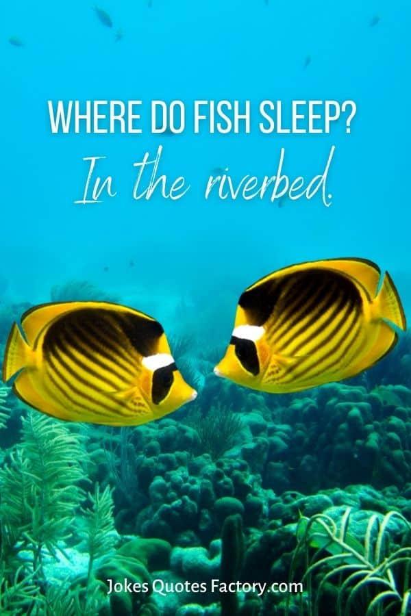 Where do fish sleep