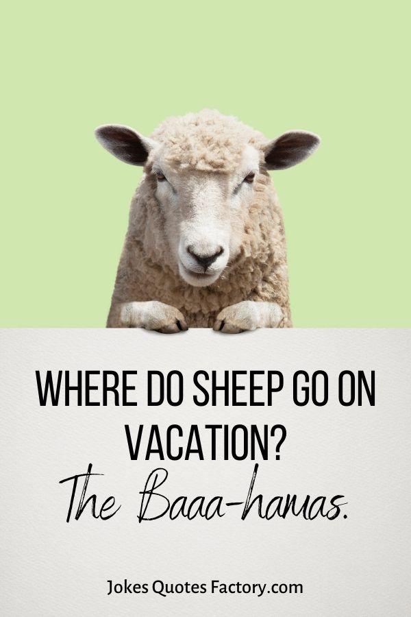 Where do sheep go on vacation