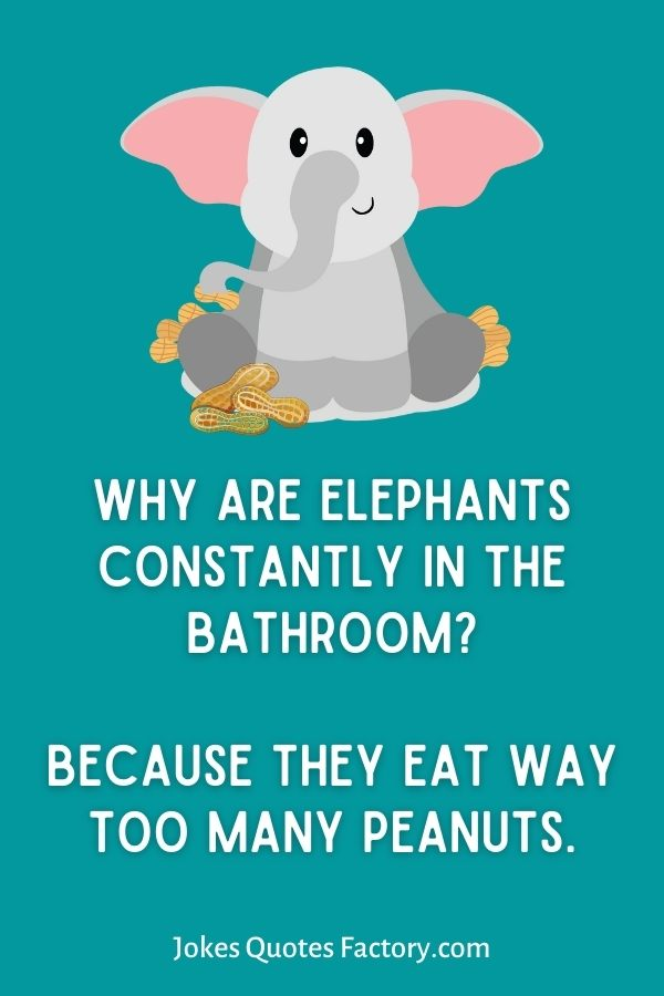 Why are elephants constantly in the bathroom