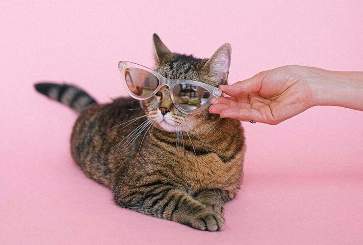 Cat Jokes: Funny Jokes and Amazing Cat Facts