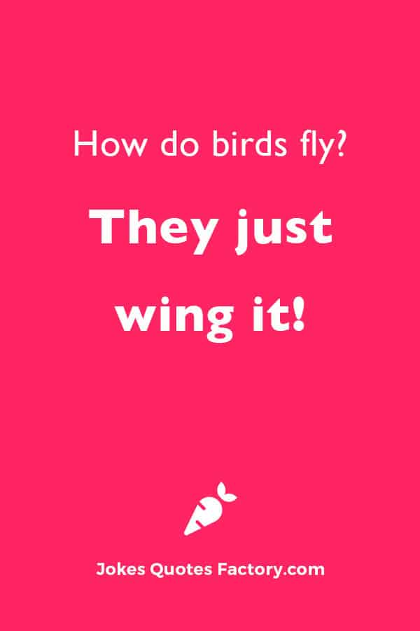 How do birds fly? They just wing it!