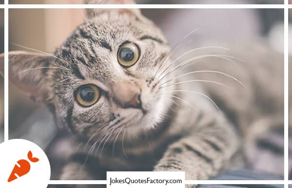 What do you call it when a cat wins first place at a dog show?  A cat-has-trophy!