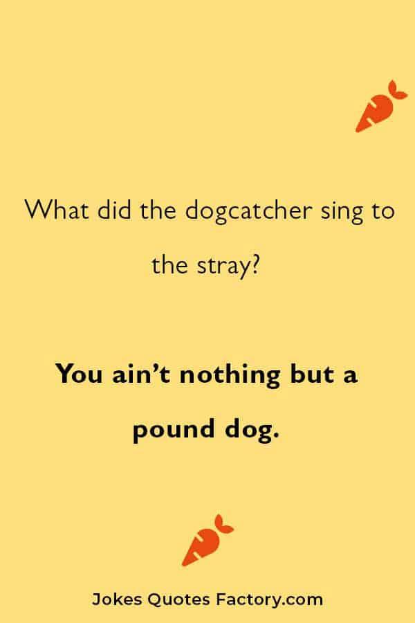 puns and dog jokes
