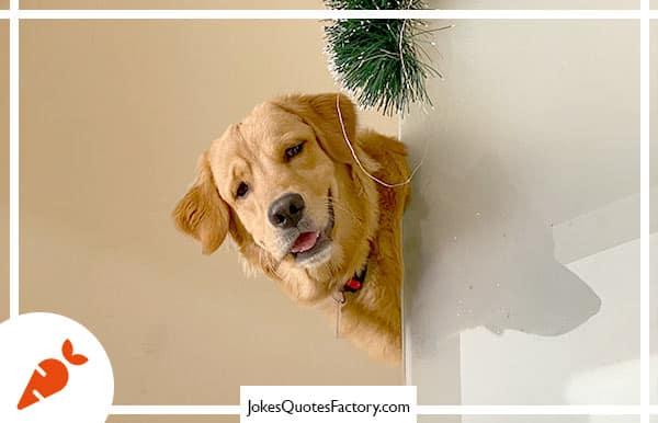 What do you call a dog magician?  A Labracadabrador.