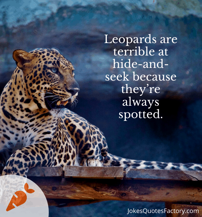 Leopards are terrible at hide and seek