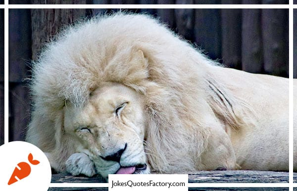 What happened when the lion ate the comedian? He felt funny!