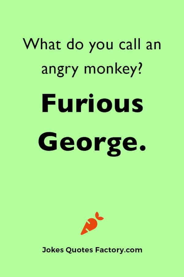 What do you call an angry monkey? Furious George.
