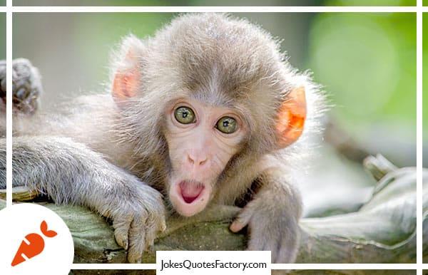 Where do monkeys go for drinks? The monkey bars!