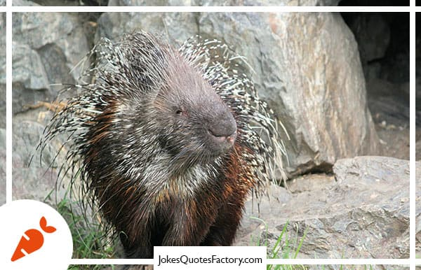 """What sound do porcupines make when they kiss? """"Ouch!"""""""