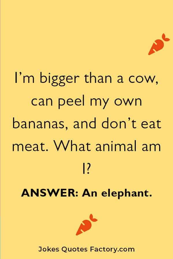 tricky animal riddles for kids
